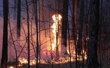 Portuqaliyada meşə yanğınları var - 39 nəfər xəsarət alıb