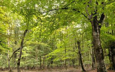 Bir gündə əkiləcək 650 min ağac hər il 2,6 min ton karbon qazının udulmasına səbəb olacaq