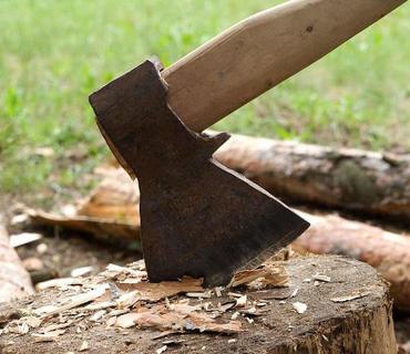 Ağacların kəsilməsi ilə bağlı şikayət yerində araşdırılıb