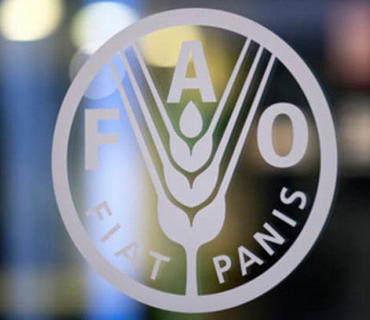 FAO Azərbaycanda pandemiyanın nəticələrinin aradan qaldırmaq üçün layihələr həyata keçirməyi planlaşdırır
