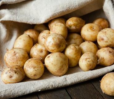 Azərbaycan kartof istehsalını artırıb