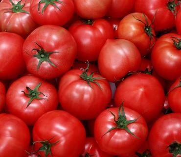 Rusiya Azərbaycanın 13 şirkətinə pomidor və alma ixracına icazə verib