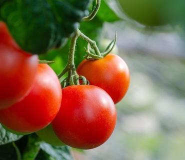 Azpromo pomidor istehsalı və ixracı ilə məşğul olan sahibkarlara müraciət edib
