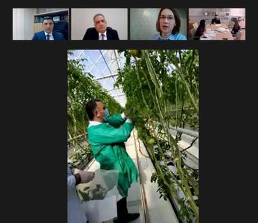 Pomidor istixanalarında videomonitorinqlər davam edir
